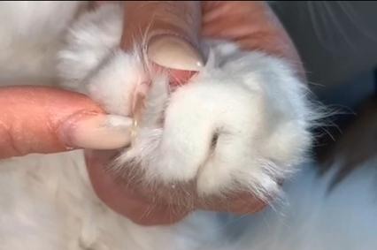 How to cut a cats claws properly